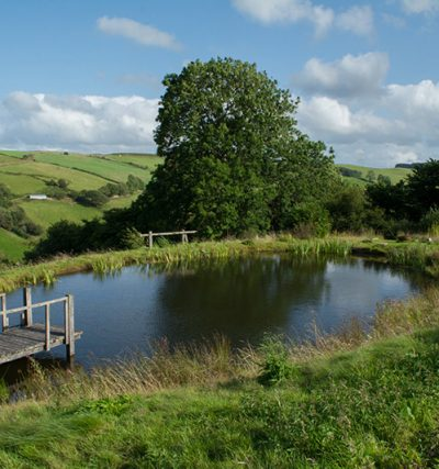 Enjoy wild swimming with a view in our swimming pond