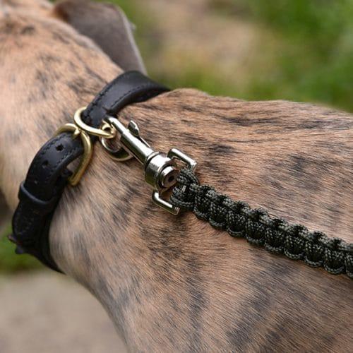 FARMERS' Dog lead