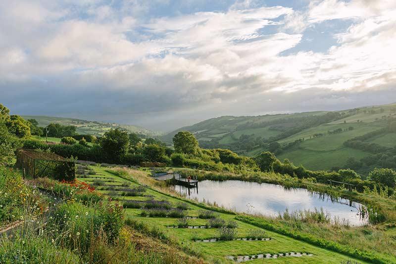 Farmers' Welsh Lavender